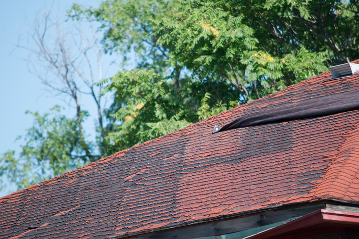3 Reasons Mold Is Harmful to Your Roof